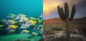 viva-baja-desert-coral (1)
