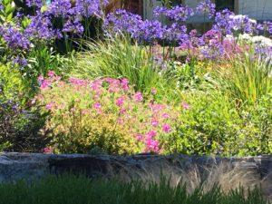 Flowers of Carmel - 1 (12)