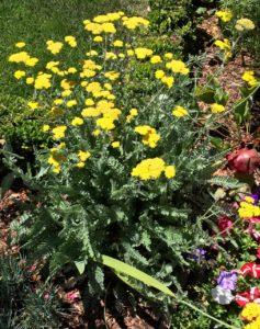 Flowers of Carmel - 1 (13)