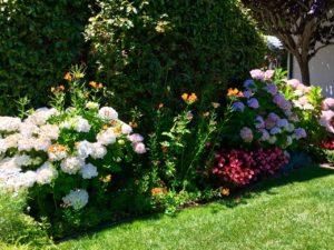Flowers of Carmel - 1 (14)